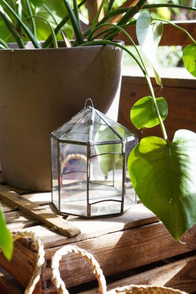 Pflanzgefäß aus Glas und Metall als Deko für dein Zuhause im Urban Jungle Stil