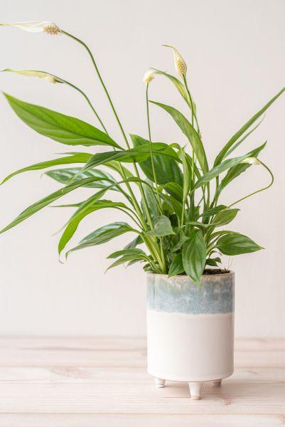Heller Pflanztopf mit kleinen Beinen als Deko für dein gemütliches Zuhause